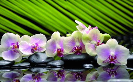 Белая орхидея на зеленом
